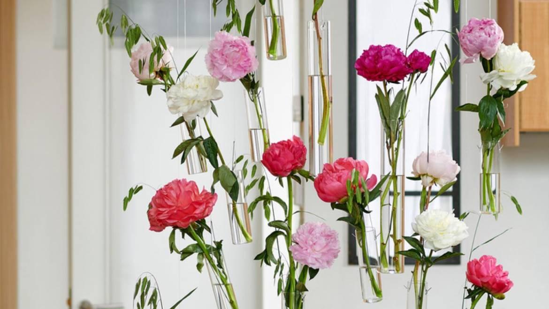 La peonia è sull'agenda dei fiori a giugno