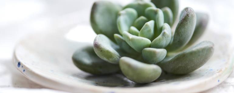Piante grasse: piante da appartamento del mese di luglio